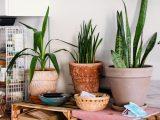Akcesoria do roślin pomagające przy pielęgnacji różnych gatunków