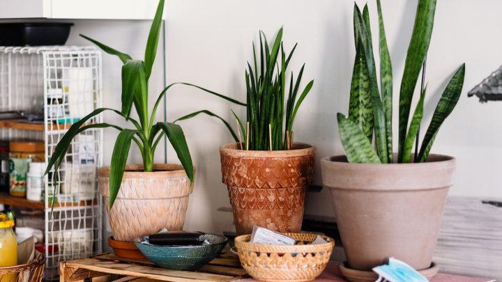 Akcesoria do roślin niezbędne przy pielęgnacji