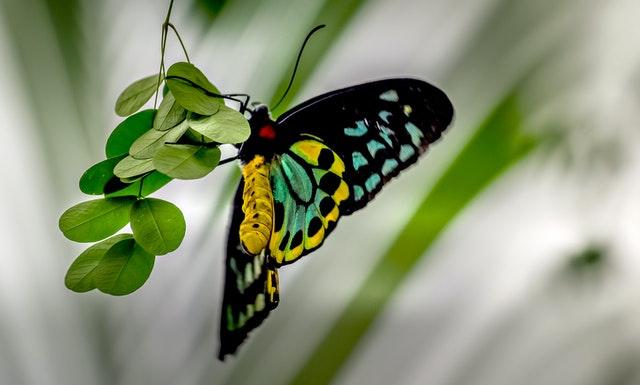 Abstrakcyjny obraz motyl – czy sprawdzi się w salonie?